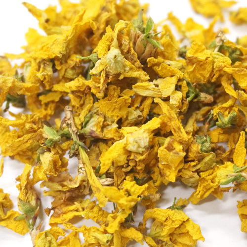 개나리꽃 50g (Forsythia Koreana Flower)