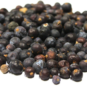 두송열매 1kg (Juniperus Communis(Juniper berries) Fruit) 알바니아