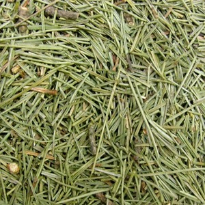 곰솔가지/잎 50g (Pinus Thunbergii Branch/Leaf) 국산